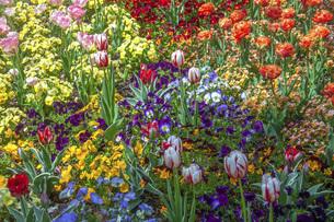 春のやくらいガーデンの写真素材 [FYI04855000]
