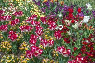 春のやくらいガーデンの写真素材 [FYI04855002]