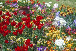 春のやくらいガーデンの写真素材 [FYI04855004]