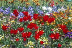 春のやくらいガーデンの写真素材 [FYI04855006]