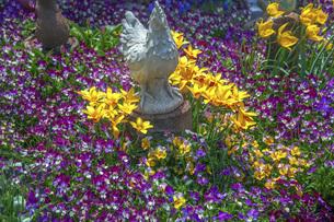 春のやくらいガーデンの写真素材 [FYI04855008]