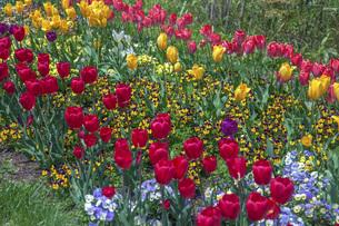 春のやくらいガーデンの写真素材 [FYI04855012]