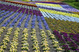 春のやくらいガーデンの写真素材 [FYI04855017]