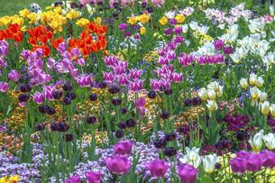 春のやくらいガーデンの写真素材 [FYI04855029]