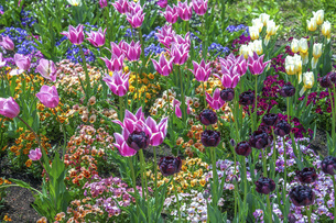 春のやくらいガーデンの写真素材 [FYI04855030]