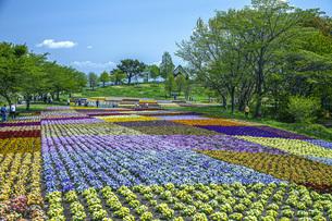 春のやくらいガーデンの写真素材 [FYI04855035]