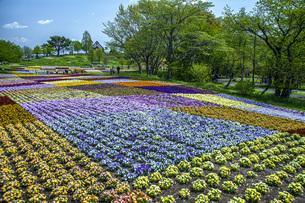 春のやくらいガーデンの写真素材 [FYI04855036]