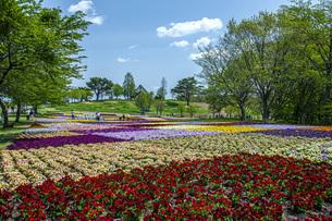 春のやくらいガーデンの写真素材 [FYI04855037]