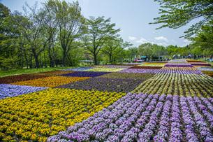 春のやくらいガーデンの写真素材 [FYI04855038]