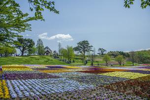 春のやくらいガーデンの写真素材 [FYI04855039]