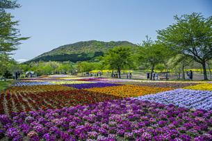 春のやくらいガーデンの写真素材 [FYI04855041]