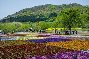 春のやくらいガーデンの写真素材 [FYI04855042]