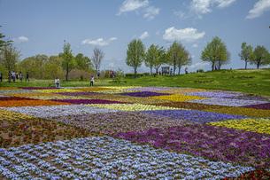 春のやくらいガーデンの写真素材 [FYI04855043]