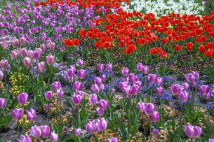春のやくらいガーデンの写真素材 [FYI04855044]