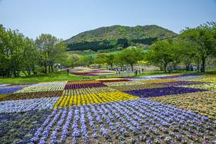 春のやくらいガーデンの写真素材 [FYI04855045]