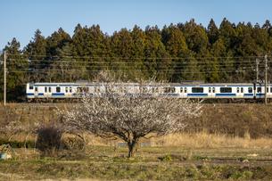 ローカル線と梅の木の写真素材 [FYI04855271]