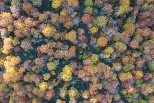 青森県 真上から見る十和田の紅葉の写真素材 [FYI04855282]