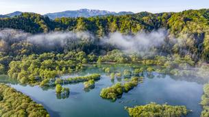 白川湖の水没林の写真素材 [FYI04855290]