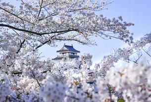 鶴ヶ城と満開の桜の写真素材 [FYI04855298]