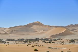 世界遺産 ナミブ砂漠の写真素材 [FYI04855304]