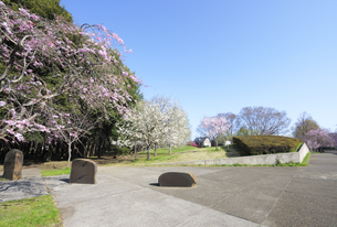 小金井公園の北口風景の写真素材 [FYI04855417]