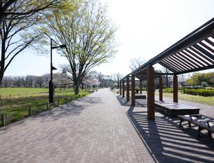 春の武蔵野中央公園の写真素材 [FYI04855430]