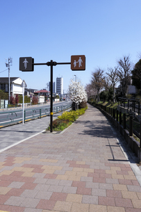 歩行者と自転車の通行区分帯のある歩道の写真素材 [FYI04855435]