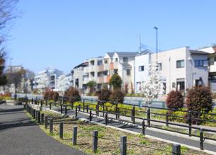 歩行者と自転車の通行区分帯のある歩道の写真素材 [FYI04855437]