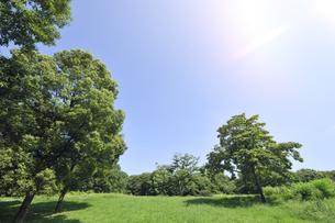 緑の草原と木々の写真素材 [FYI04855443]