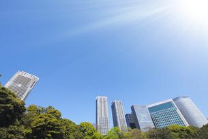 新緑の木々と汐留シオサイトの高層ビル群の写真素材 [FYI04855459]
