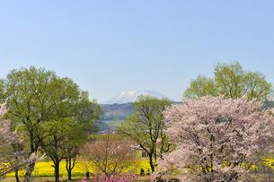千曲川ふれあい公園の春の写真素材 [FYI04855462]