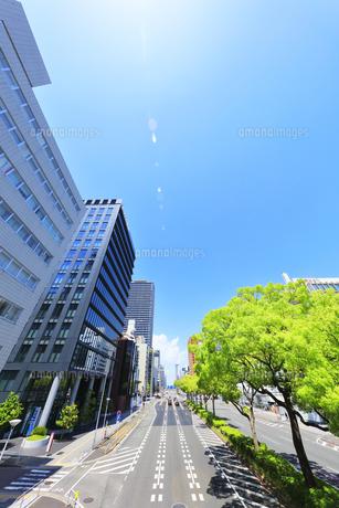 名古屋市 伏見通(国道19号)新緑の街路樹と空に太陽の写真素材 [FYI04855477]