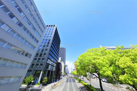 名古屋市 伏見通(国道19号)新緑の街路樹と青空の写真素材 [FYI04855479]