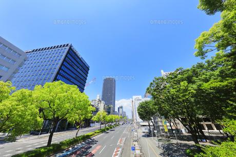 名古屋市 伏見通(国道19号)新緑の街路樹と青空の写真素材 [FYI04855480]