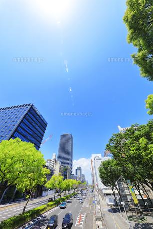 名古屋市 伏見通(国道19号)新緑の街路樹と空に太陽の写真素材 [FYI04855481]