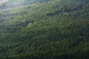 山肌の杉林の写真素材 [FYI04855695]