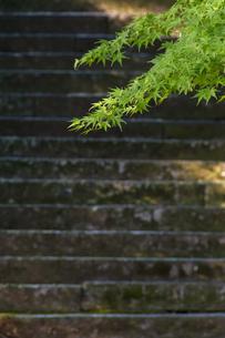 階段と新緑の写真素材 [FYI04855700]