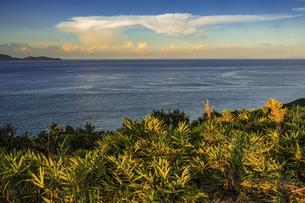 【夏】入道雲が浮かんでいる海の自然風景 の写真素材 [FYI04855888]