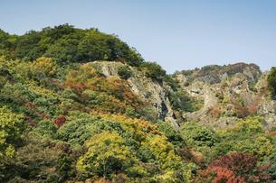 【香川県 小豆島】紅葉した秋の寒霞渓 自然風景の写真素材 [FYI04855894]