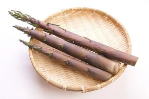 淡竹の筍の写真素材 [FYI04855988]