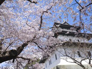 松前城の桜の写真素材 [FYI04856023]