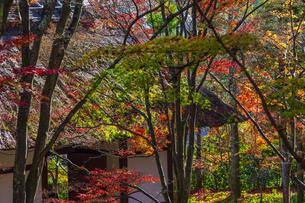 京都・常寂光寺の紅葉の写真素材 [FYI04856467]