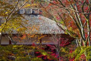 京都・常寂光寺の紅葉の写真素材 [FYI04856468]