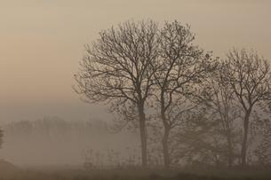 朝霧と樹木の写真素材 [FYI04856551]