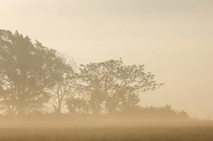 朝霧と樹木の写真素材 [FYI04856552]