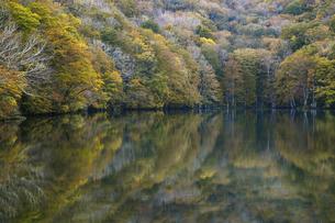 蔦沼 水面に映る紅葉の写真素材 [FYI04857104]