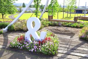 神奈川県立 花菜ガーデンの写真素材 [FYI04857257]