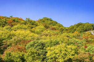 【香川県 小豆島】紅葉した秋の寒霞渓 自然風景の写真素材 [FYI04857445]