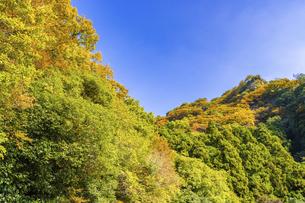 【香川県 小豆島】紅葉した秋の寒霞渓 自然風景の写真素材 [FYI04857446]
