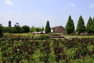 滋賀農業公園,ブルーメの丘,あそびのエリアの写真素材 [FYI04858225]